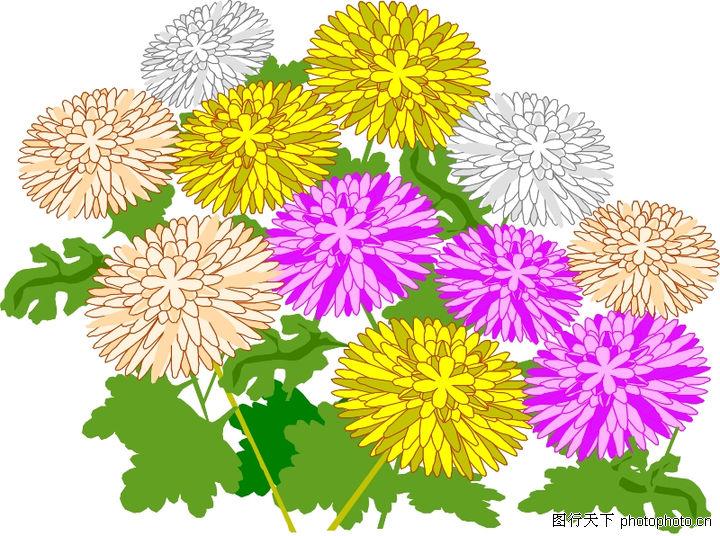 花草,植物,金菊,花草0007