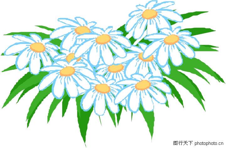 花草,植物,雏菊,花草0040