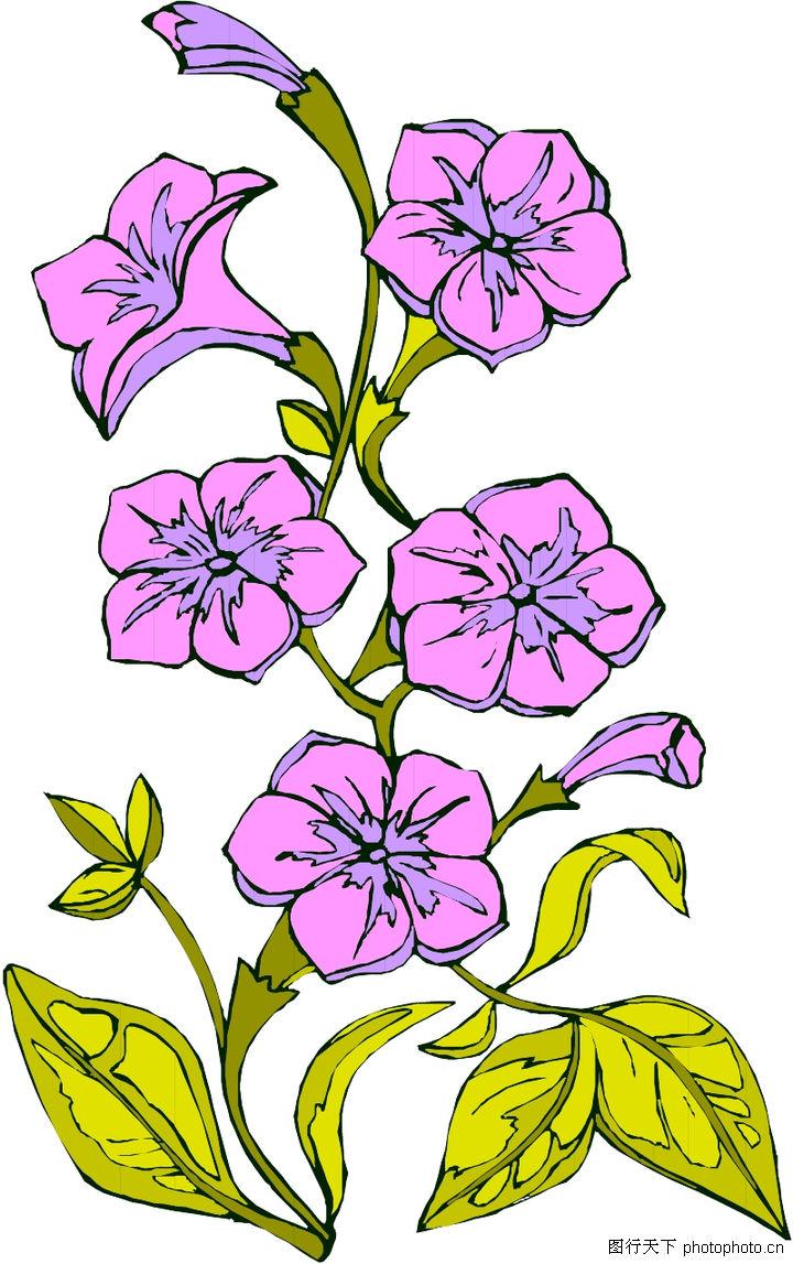 花草,植物,粉色花朵,花草0077