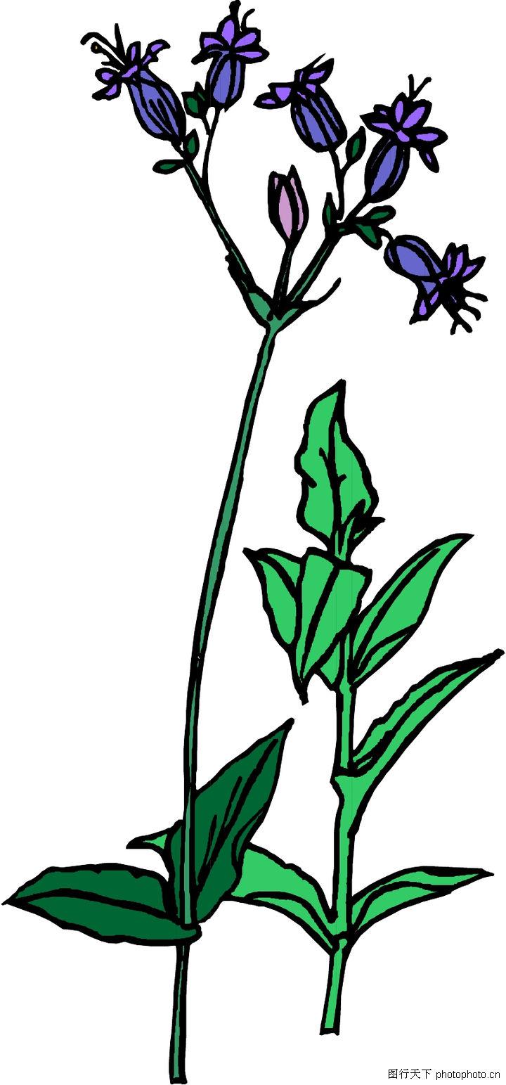 花草,植物,花草0082