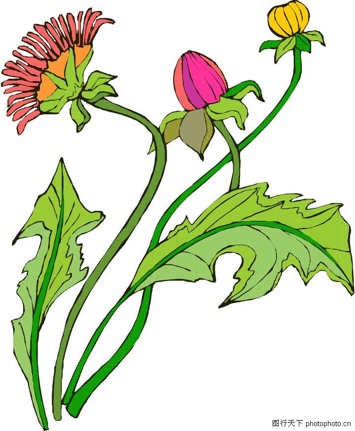 花草,植物,花草0232