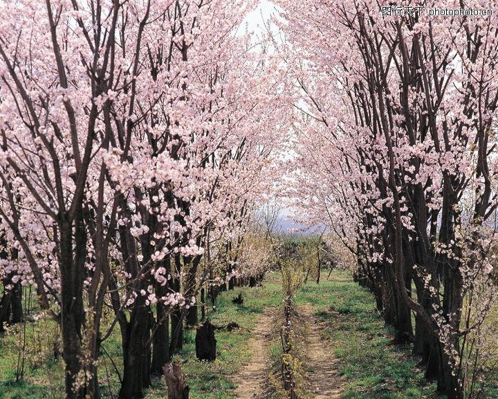春天大自然风景花_观赏网
