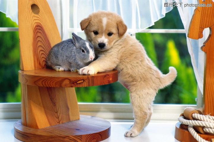 可爱狗狗,动物,小狗 依偎