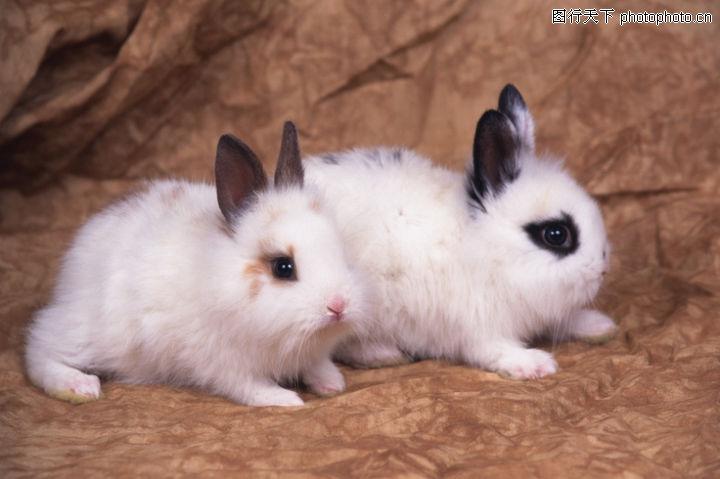 可爱小动物,动物,黑眼