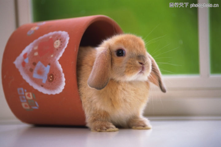可爱小动物,动物,兔子 嘴唇 塑料桶,可爱小动物0025