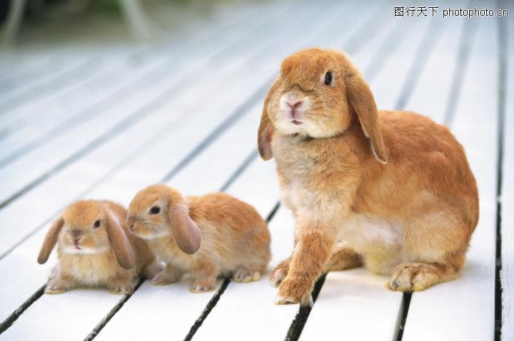 可爱小动物,动物,可爱的兔子