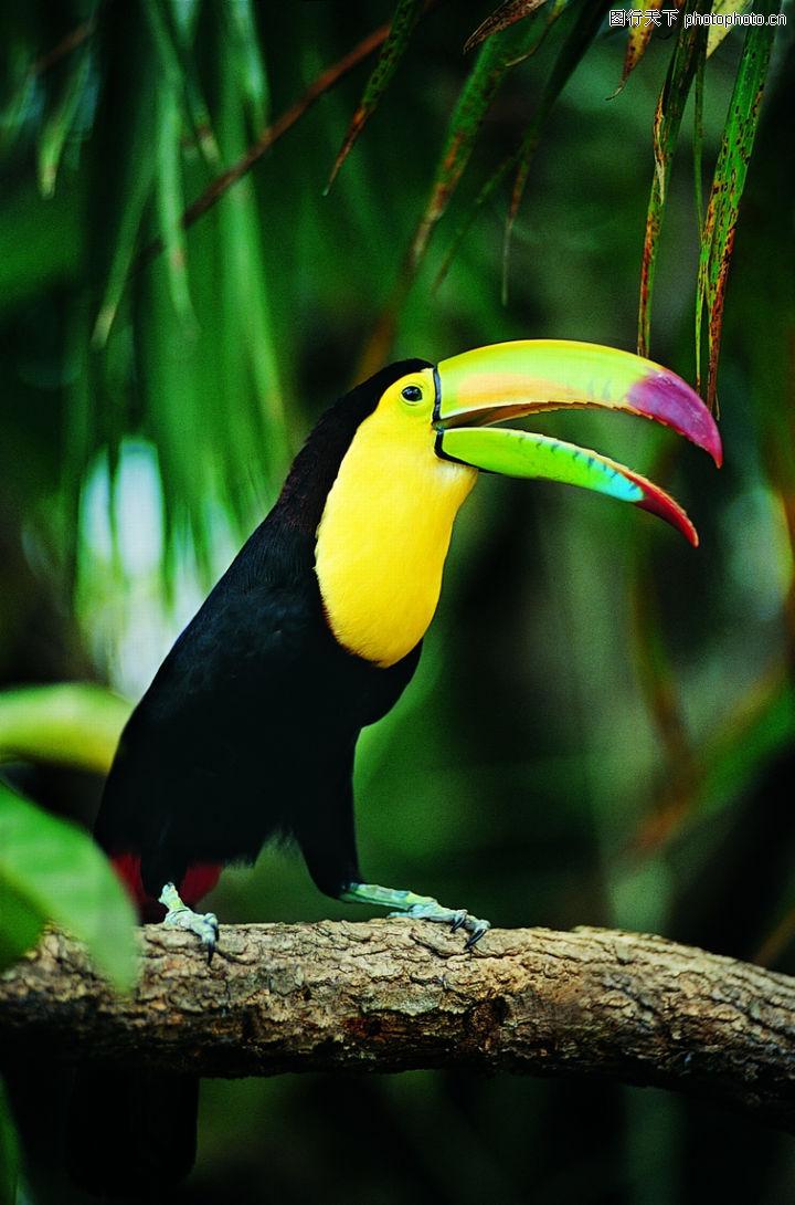 动物,黑色羽毛