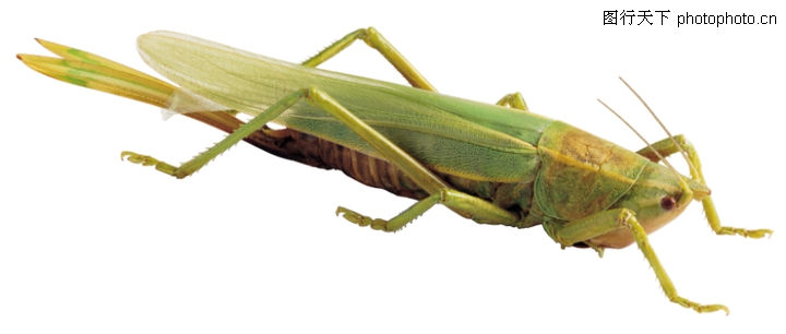 爬行动物,昆虫0169