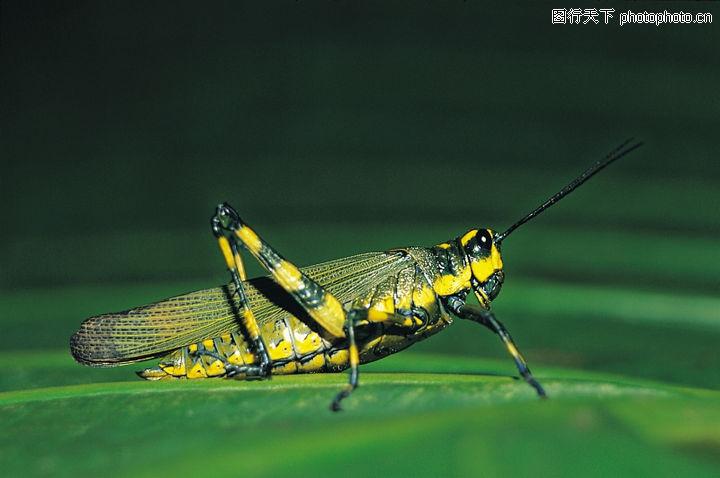 爬行动物与昆虫0093