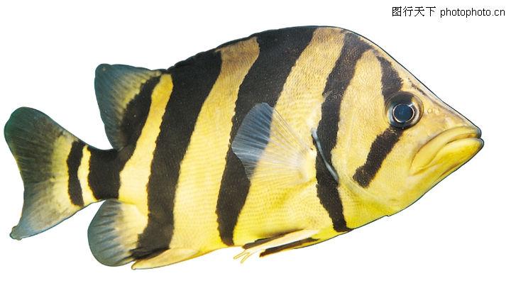 青岛的海鱼图片及名字