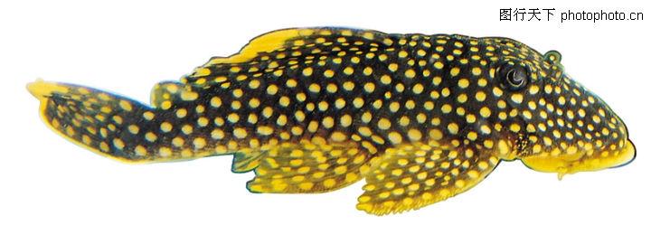 多彩鱼,动物,海洋 生物