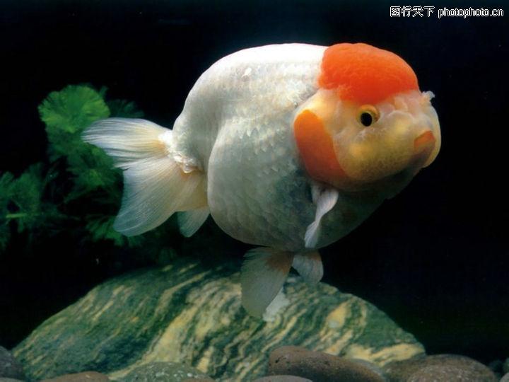 金鱼满堂水族馆 吉林龙鱼论坛