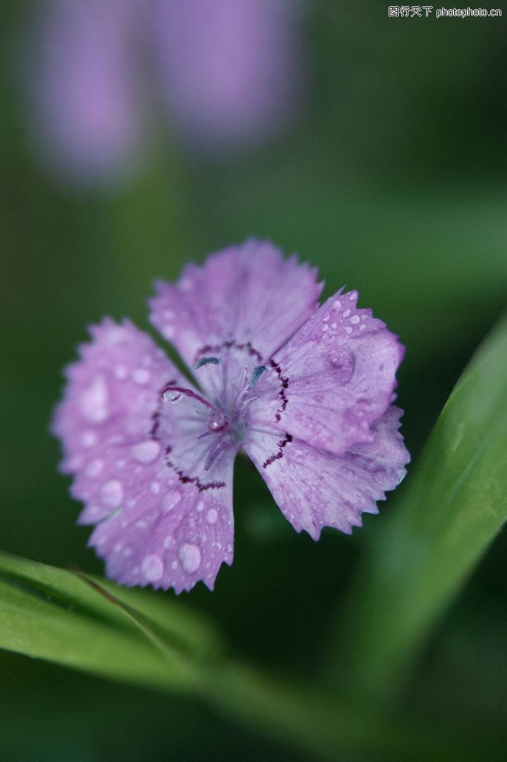 花之物语 自然风景 紫色小花