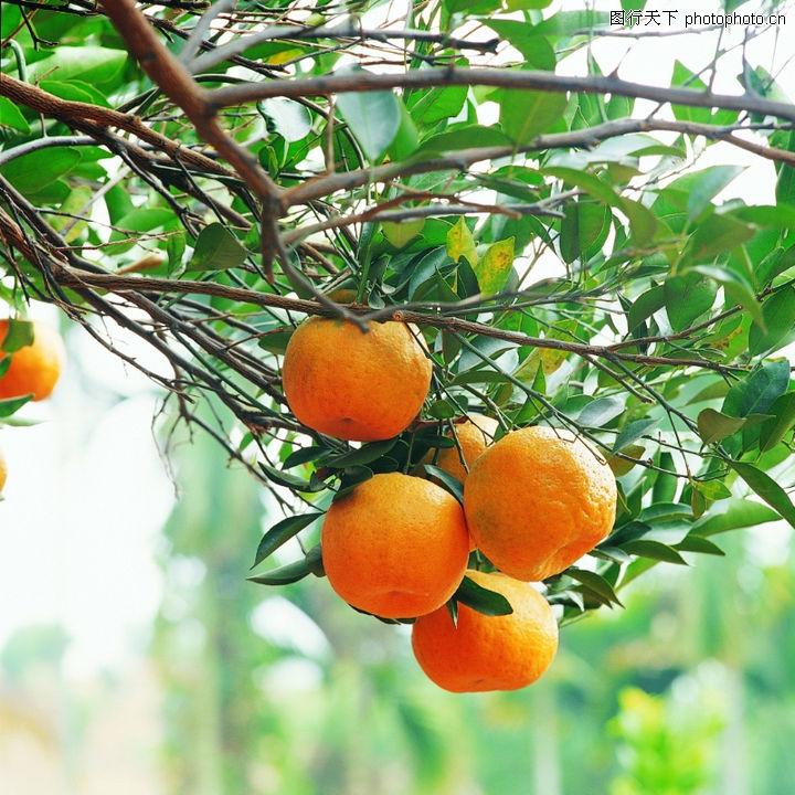 果园景色图片 秋天果园景色图片,卡通秋天果园景色图片图片
