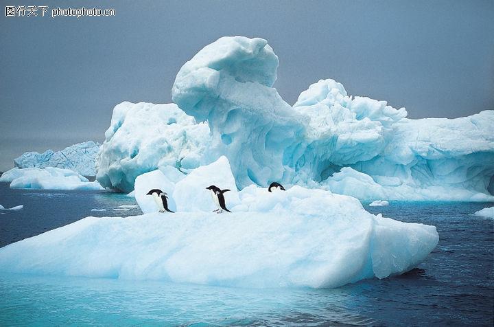 企鹅世界,动物,冰山 南极 寒冷,企鹅世界0115