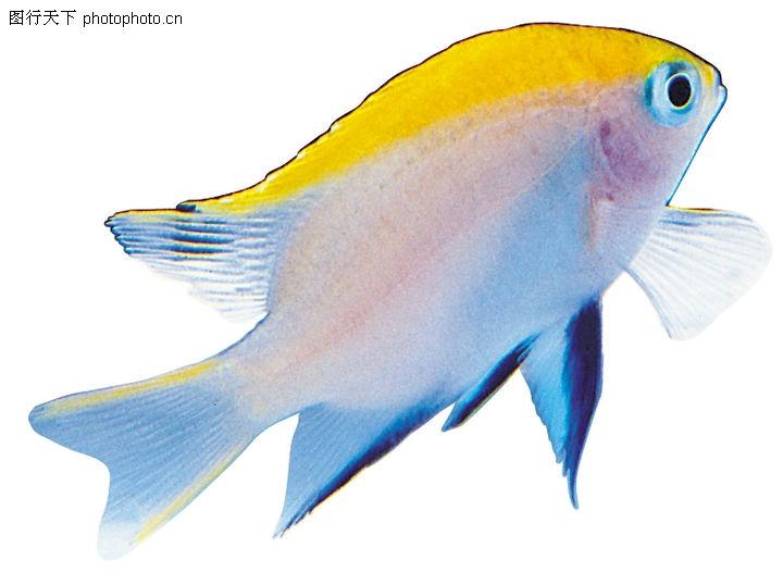 多彩鱼,动物,海洋鱼类,多彩鱼0214