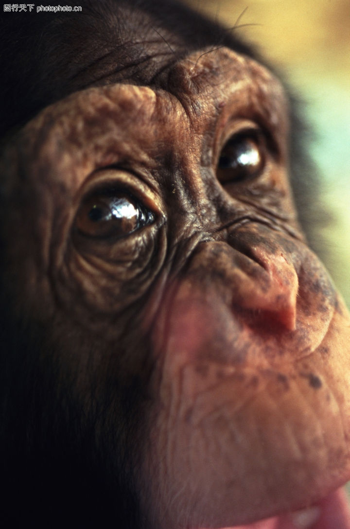 动物世界,动物,眼部特写,动物世界0195