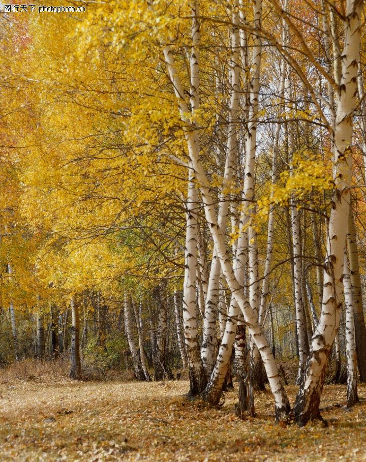 山林雪景,自然风景,秋天 树叶 变黄,山林雪景0007
