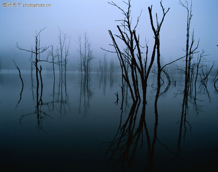 山林雪景,自然风景,荒凉 枯枝 光秃,山林雪景0076