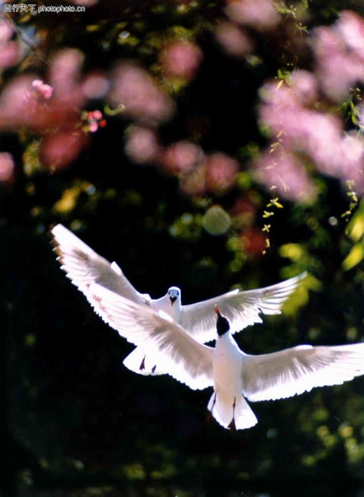飞翔的鸽子简笔画步骤-怎么画鸽子好看又简单,和平鸽简笔画图片大全