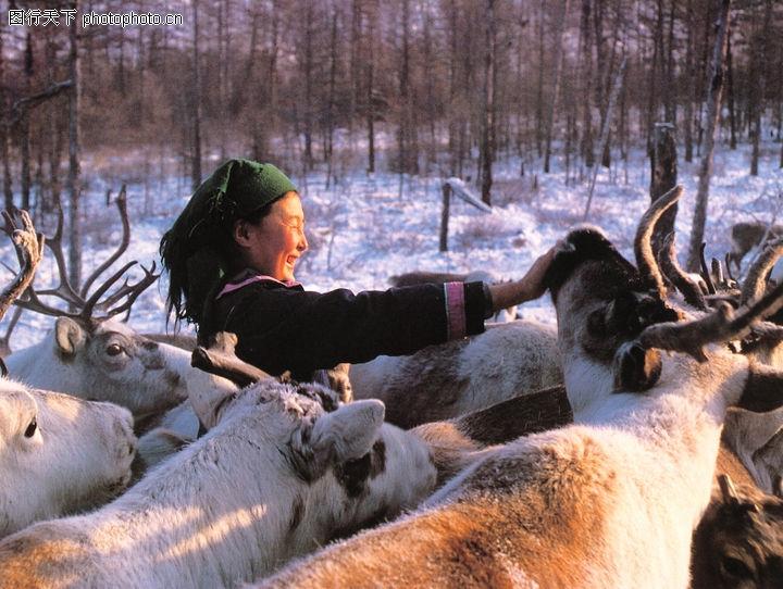 鄂温克族姑娘给驯鹿喂盐巴 黑龙江省图