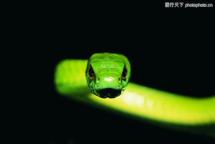 爬行动物与昆虫0120