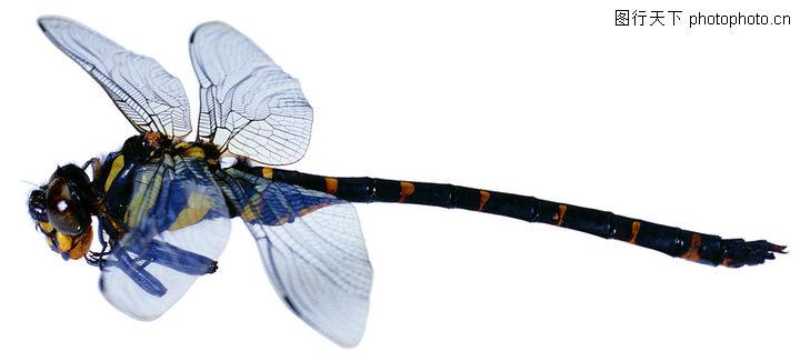 爬行动物与昆虫0138