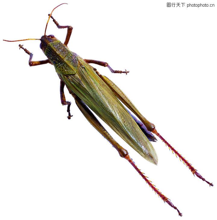 爬行动物,昆虫0178