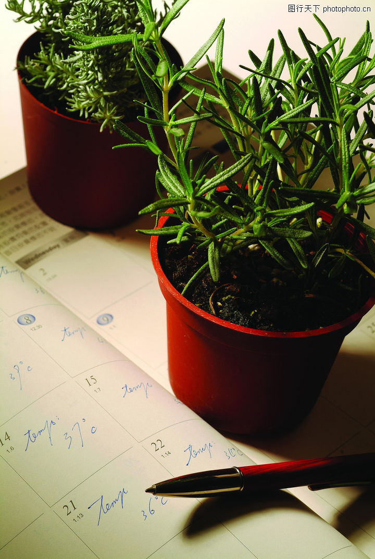 生化科技,医疗,盆景 植物 数据,生化科技0098
