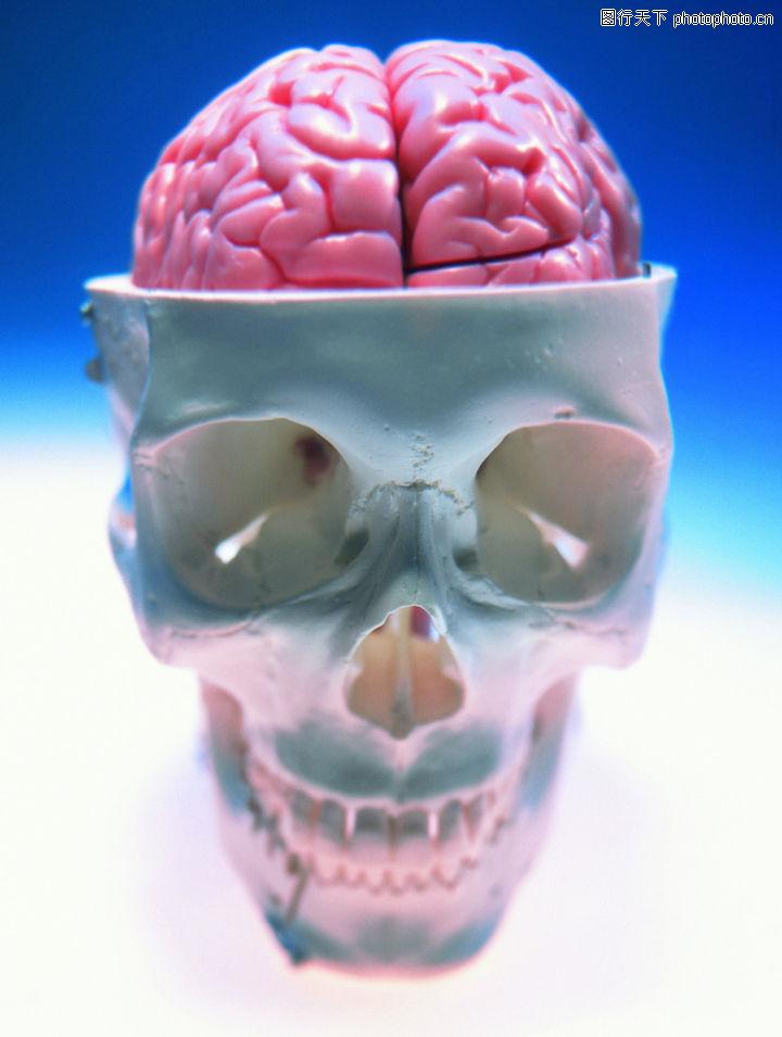 生化科技,医疗,大脑 脑细胞 头颅,生化科技0112