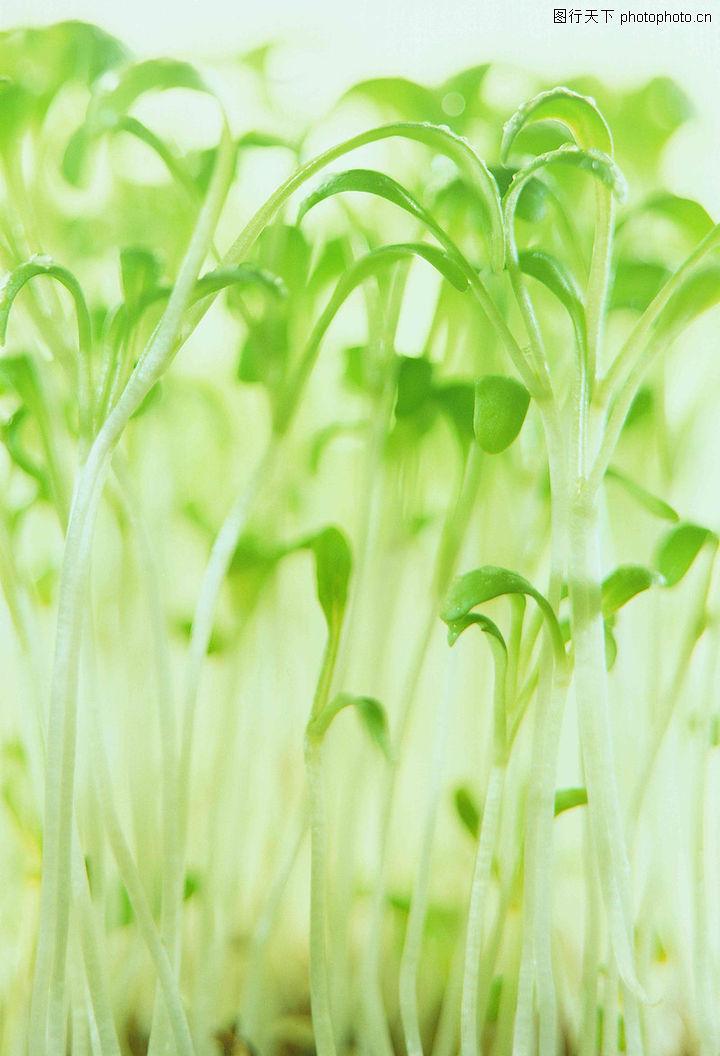 植物的力量,植物,春天