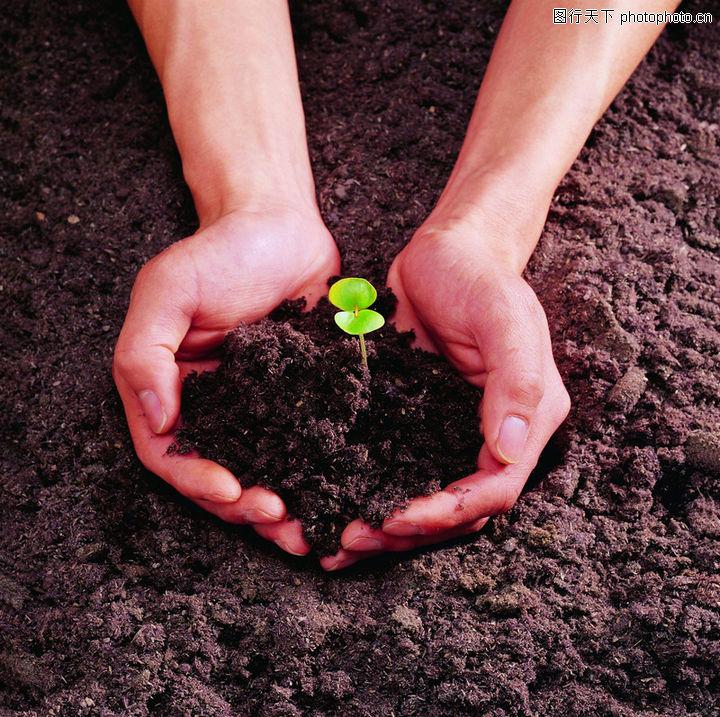 植物,泥土 绿苗