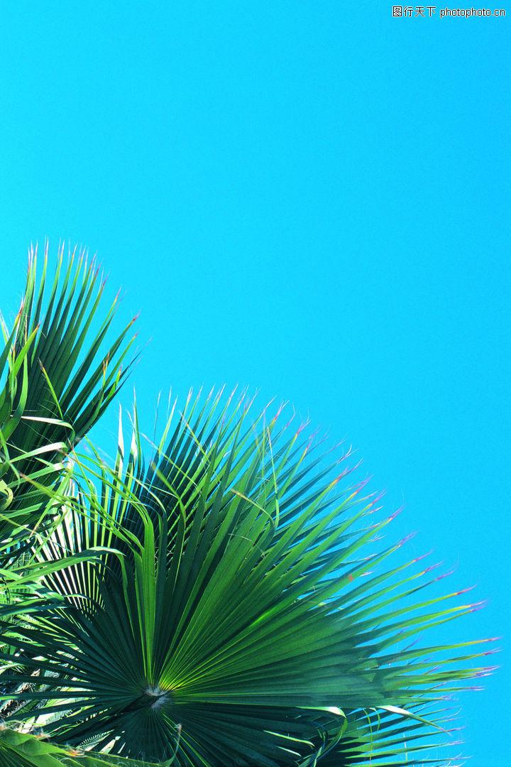 自然花草0252-自然花草圖-植物圖庫
