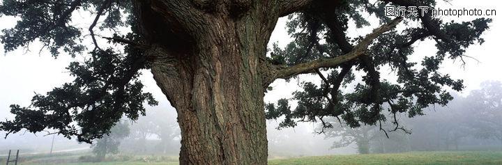 全景圖,風景,樹的特寫 一棵大樹 粗壯樹干,全景圖0177