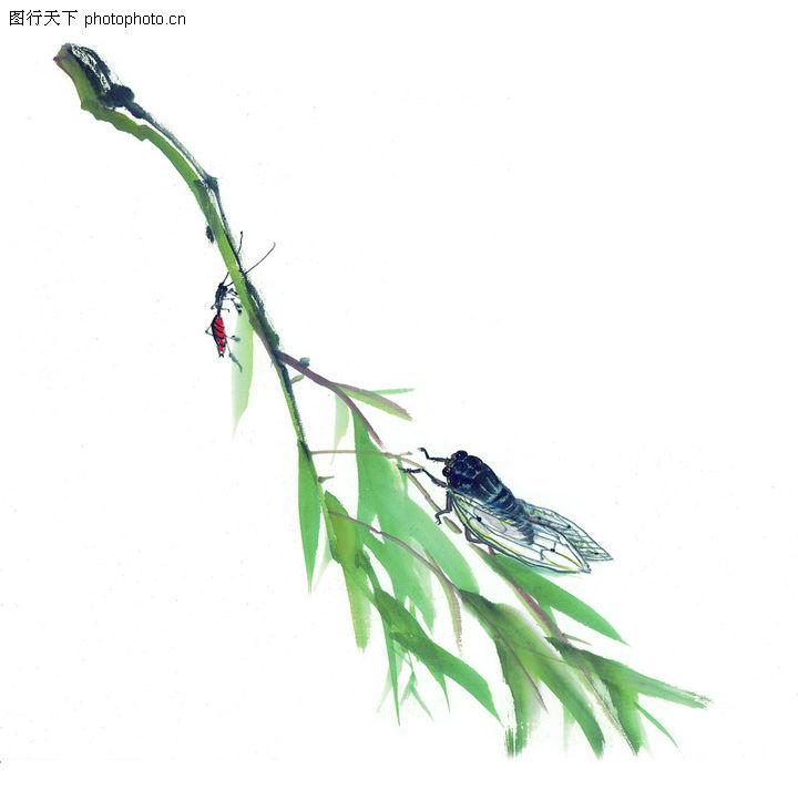 柳树 水墨画图片