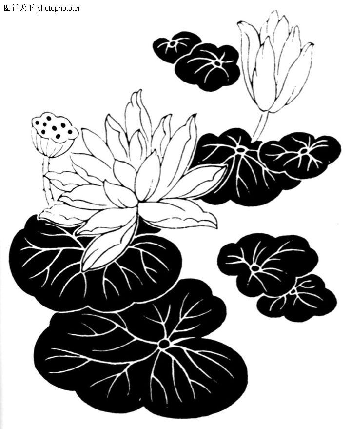 荷花荷叶水墨画-植物压花 荷花