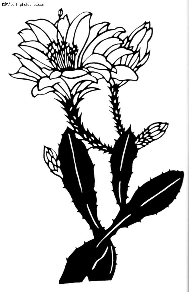 植物图案花纹0272