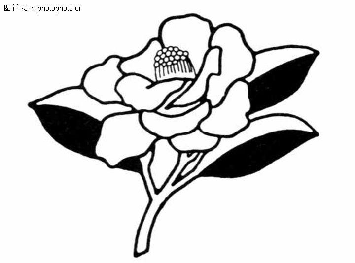 铅笔素描花朵图片步骤