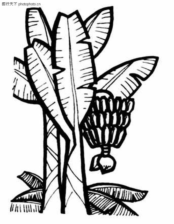 卡通香蕉树怎么画