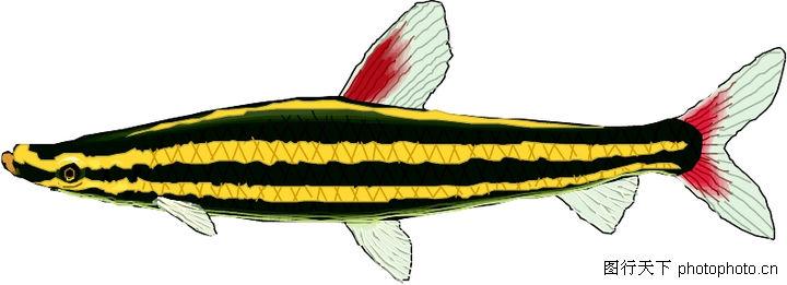 海洋动物2132