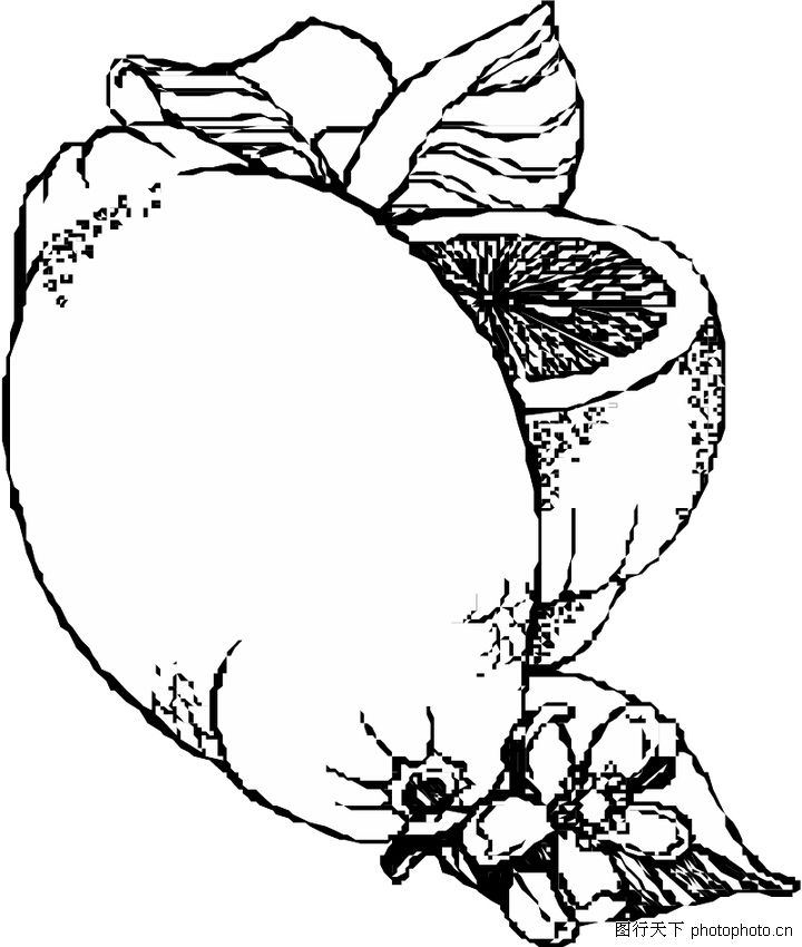 蔬菜水果-植物-植物