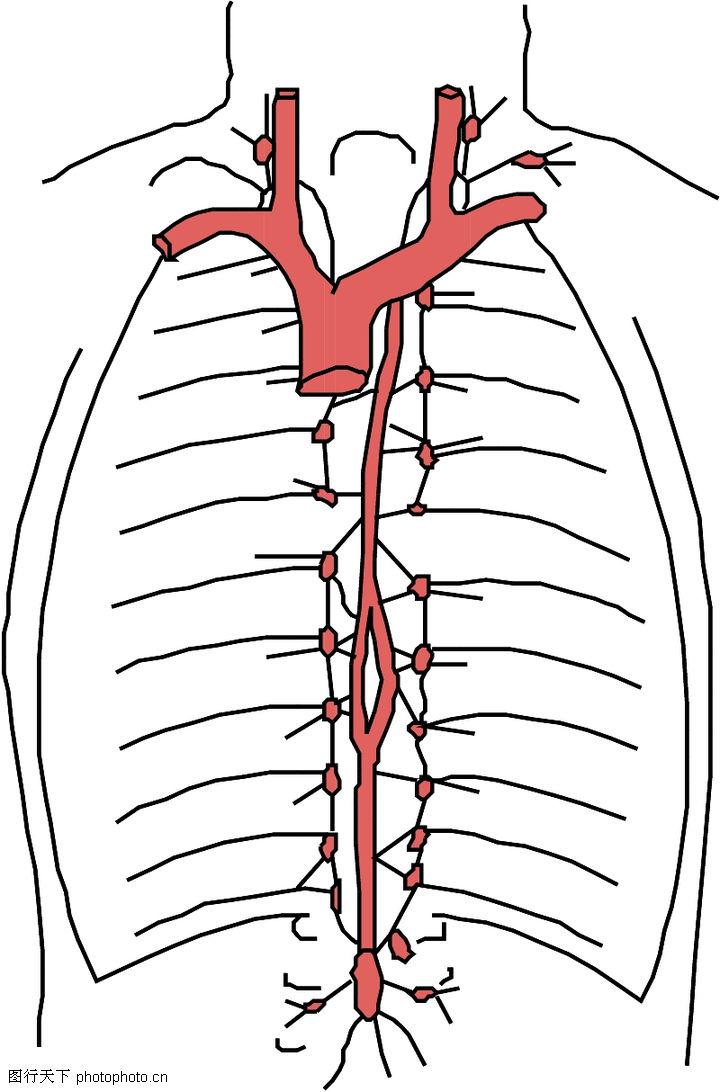 平鱼怎么去内脏图解