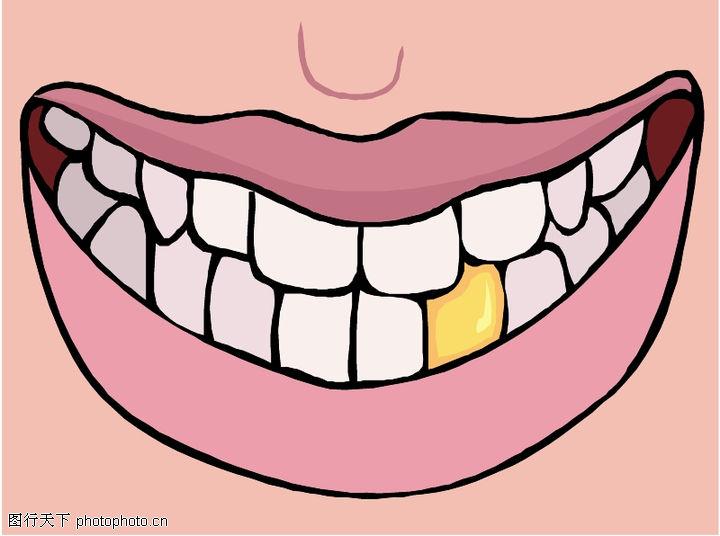牙齿结构图高清