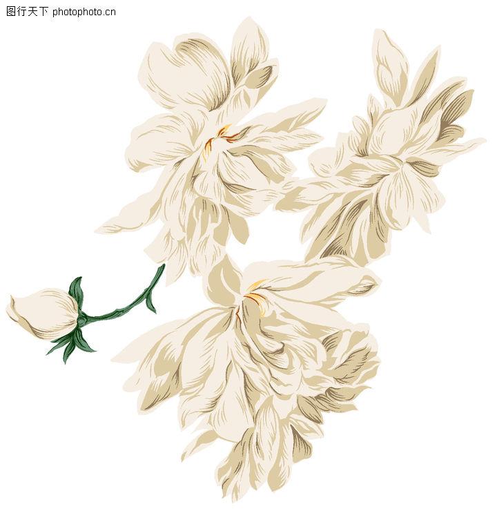 典雅花纹,花纹边框,嫩苞