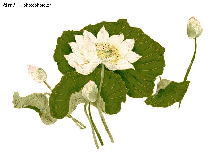 应用案例模版,花纹边框,荷花 荷叶 莲花,应用案例模版0046