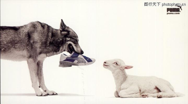 野生动物,世界广告海报设计年鉴2007-20105