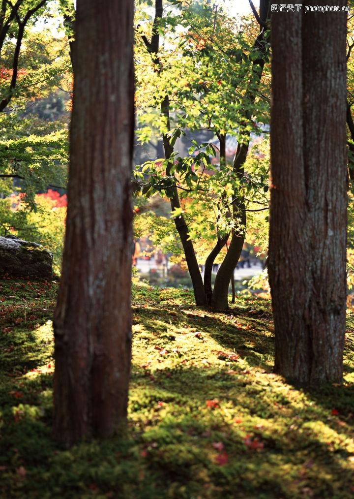 日本古建筑,建筑,绿化摄影 大树干 阳光透过,日本古建筑0175