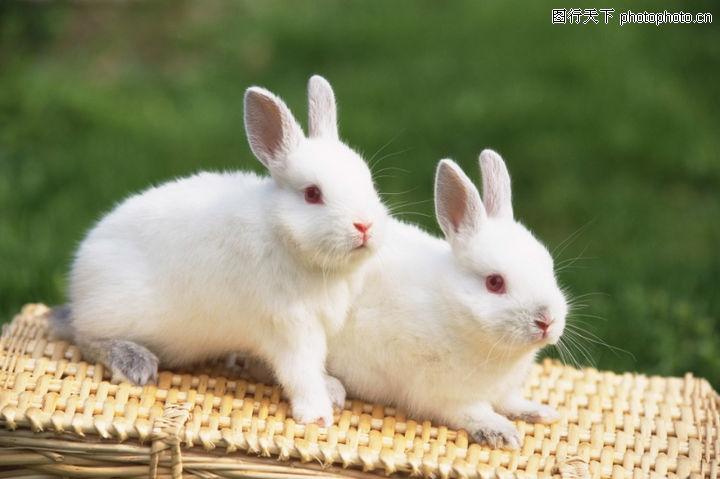 可爱小动物0177-可爱小动物图-动物图库-小白兔