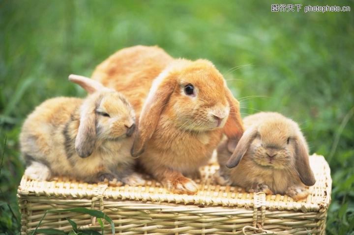可爱小动物 动物 大兔子和小兔子 耳朵长长 白胡须