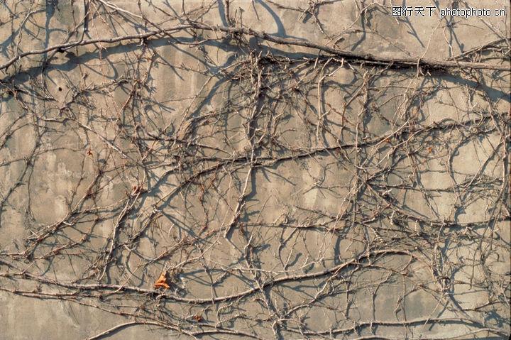 自然底纹,底纹,枯枝 墙壁 秋天,自然底纹0097